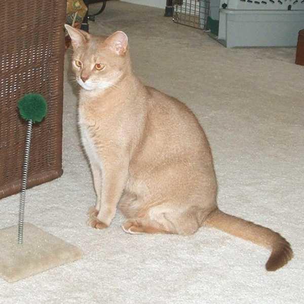 Веснушчатая кошка
