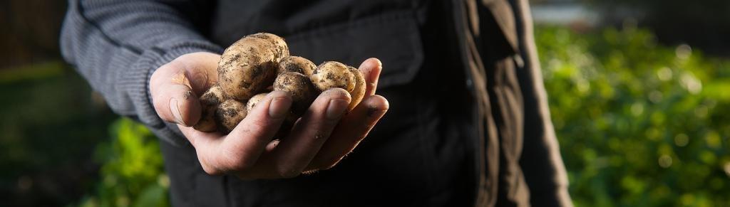 Чертеж окучника для картофеля ручной