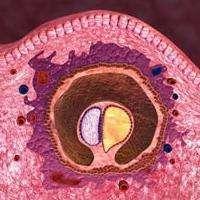Зародыш человека - чудо, которое со временем станет ребенком