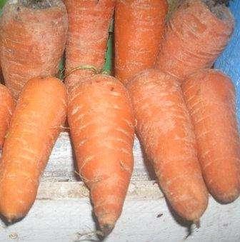 Как вырастить морковь на своем участке, чтобы она порадовала вас и удивила окружающих