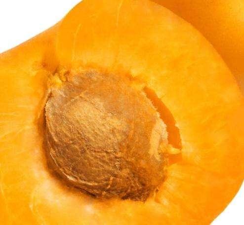 Польза абрикосовых косточек. Стоит ли их выбрасывать или можно как-то применить