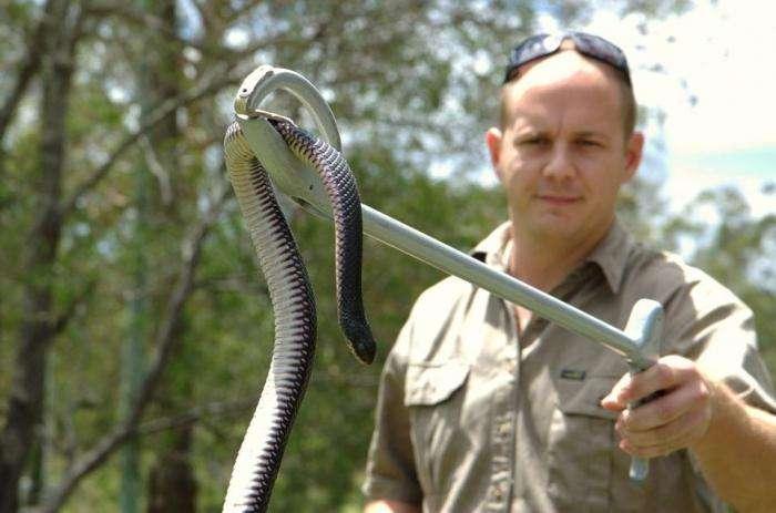 Разбираемся, как избавиться от змей на дачном участке