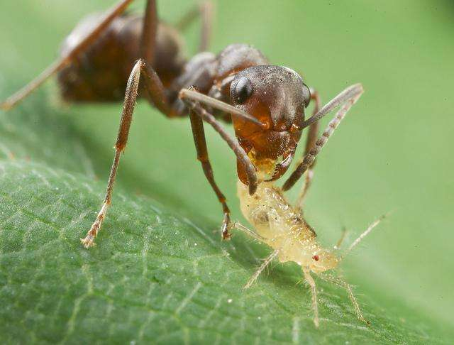 is lorazepam harmful insects pictures
