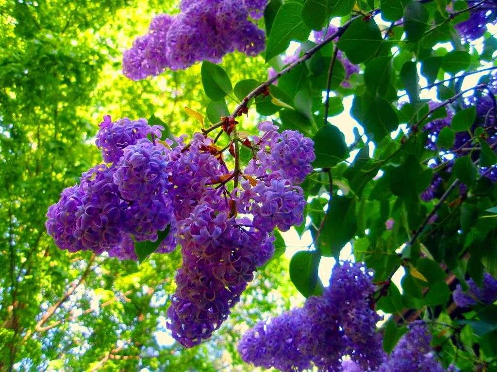Кустарники для сада: виды, названия, посадка и уход