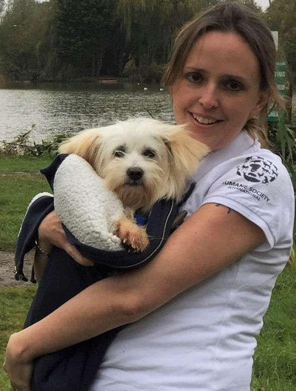 Приюты для собак в Уфе: список, адреса, контакты, условия содержания собак