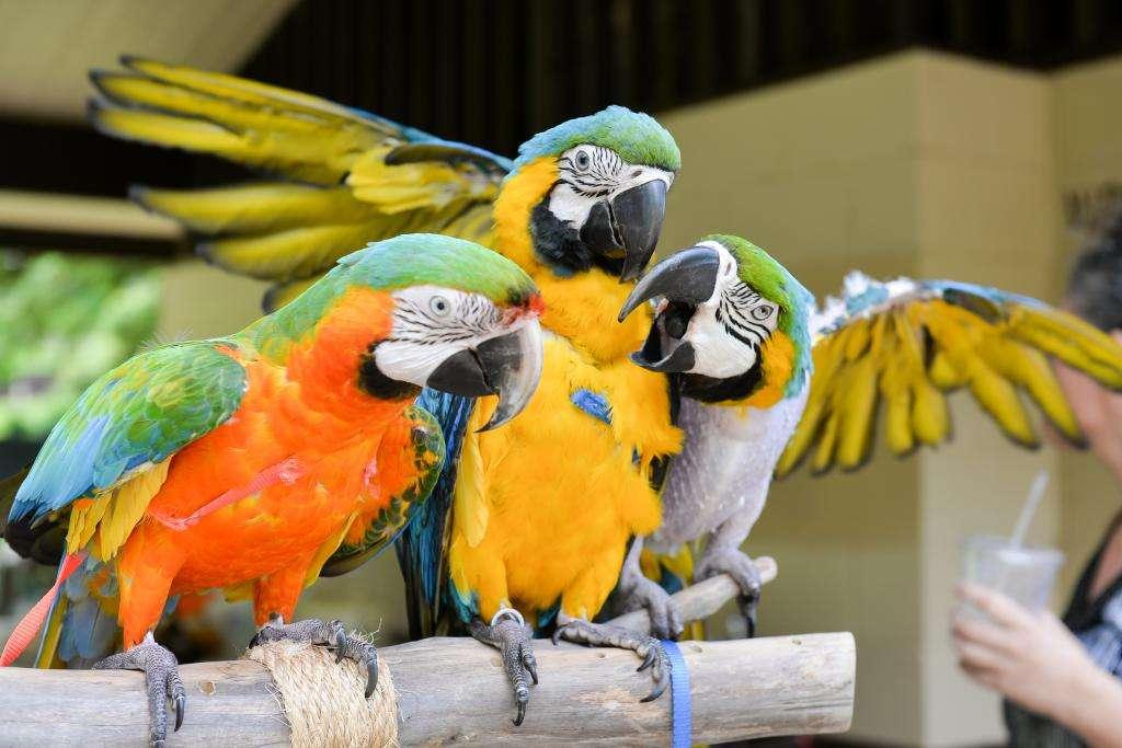 Можно ли попугаю банан? Какие фрукты, овощи и ягоды рекомендуется пернатым питомцам?