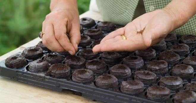 Как пользоваться торфяной таблеткой? Какие торфяные таблетки лучше? Выращивание рассады в торфяных таблетках