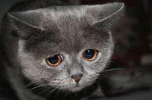 О чем говорит кровь в кале у кошек?