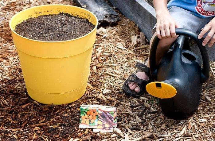 Как  сеять морковь правильно, чтобы получить отличный урожай