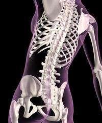 Важно знать, как называется подвижное соединение костей