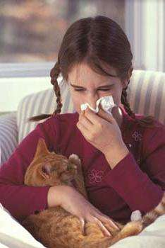 Симптом аллергии на кошек и как от него избавиться