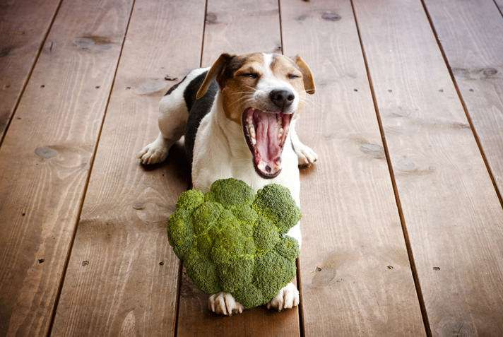 Какие овощи можно собаке: особенности рациона, советы ветеринаров