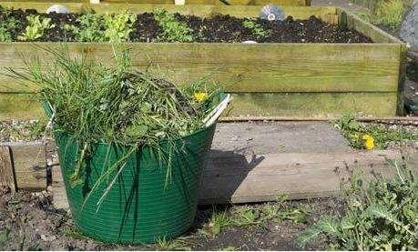 Несколько советов о том, как избавиться от сорняков на участке