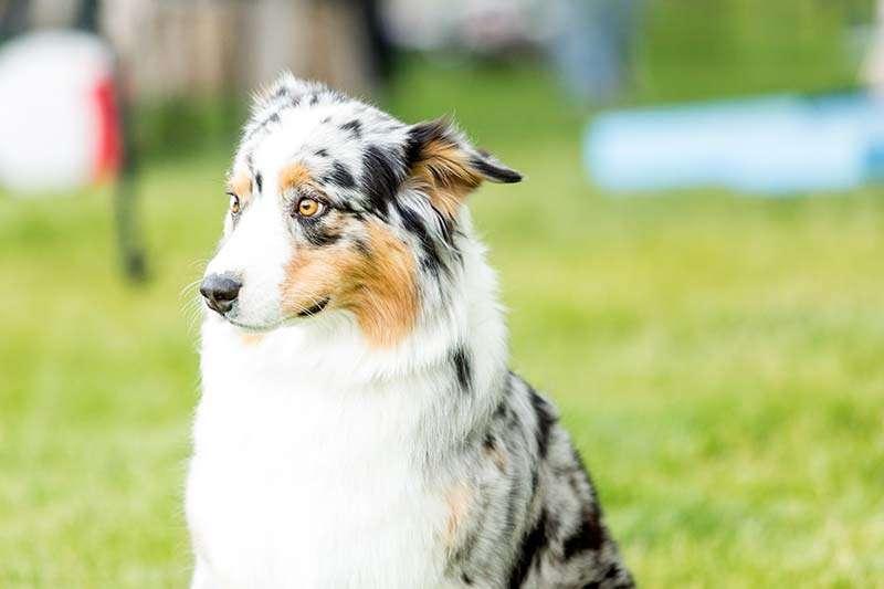 "Корм для собак — ""Роял Канин Гастроинтестинал"". Описание"