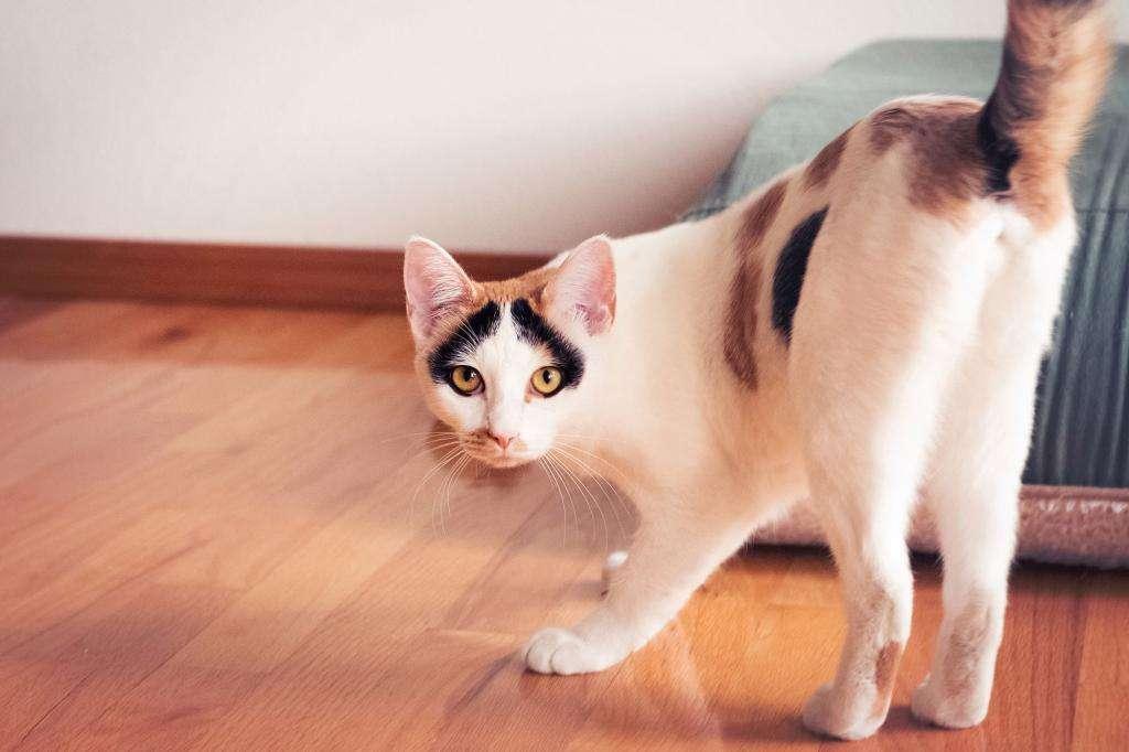 Продолжительность течки у кошки: сроки, особенности, симптомы, советы ветеринаров