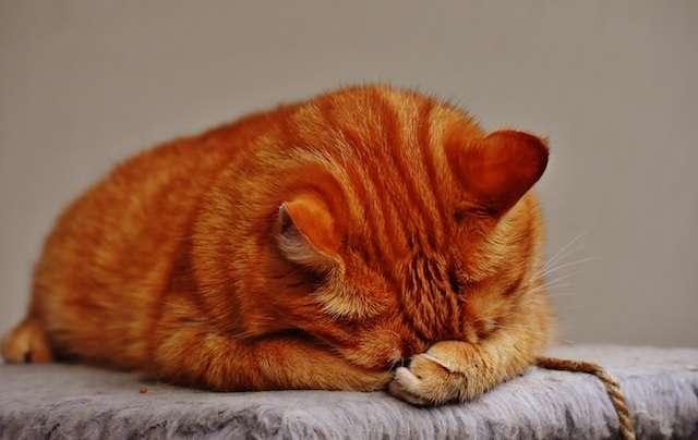 Как отучить кота драть мебель и обои: причины такого поведения, способы решения проблемы и советы ветеринаров