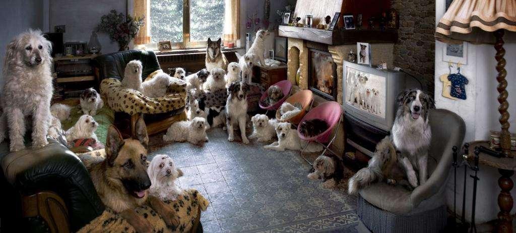 Что такое передержка собак: понятие, уход за животными в домашних условиях и правила временного содержания