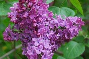 Красивоцветущие кустарники с ранней весны и до поздней осени