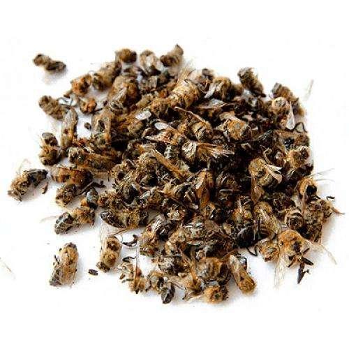 Пчелиный помор - универсальное средство от всех болезней