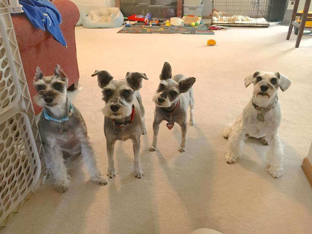Какую собаку завести в квартире с детьми: характеристика пород, советы заводчиков