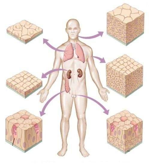 Эпителий плоский: функциональное и диагностическое значение