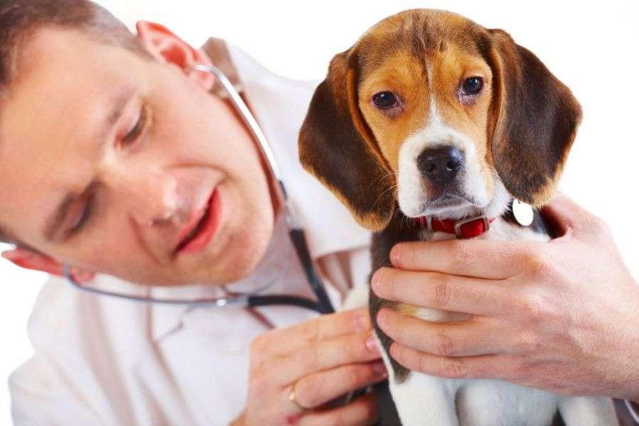 Капли на холку от глистов для собак: названия, инструкция по применению и отзывы о качестве