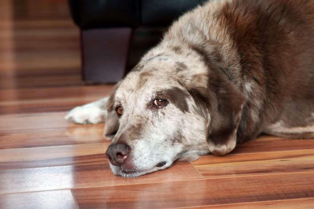Недержание мочи у собак — причины, симптомы, диагностика и особенности лечения